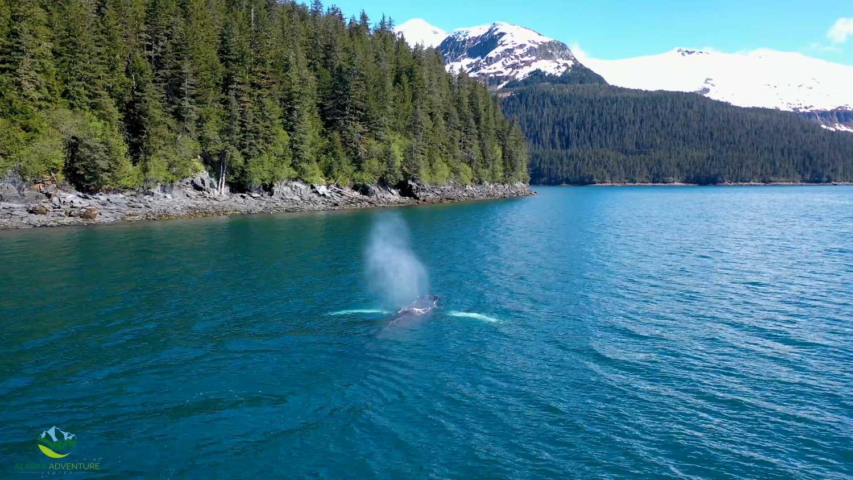 Alaska Whales