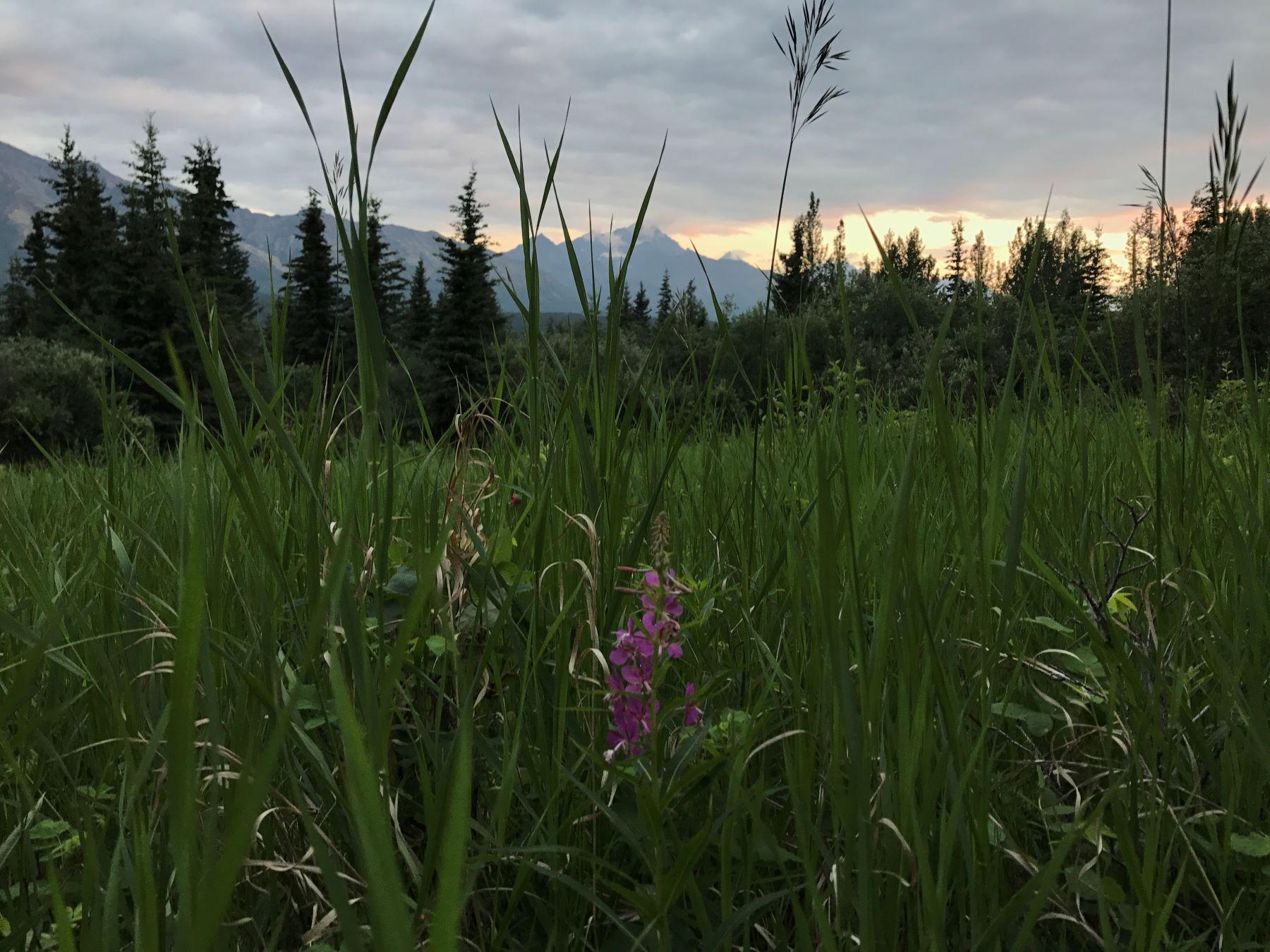 Day Hike Wildflowers