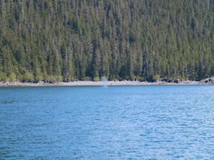 migrating animals in Alaska