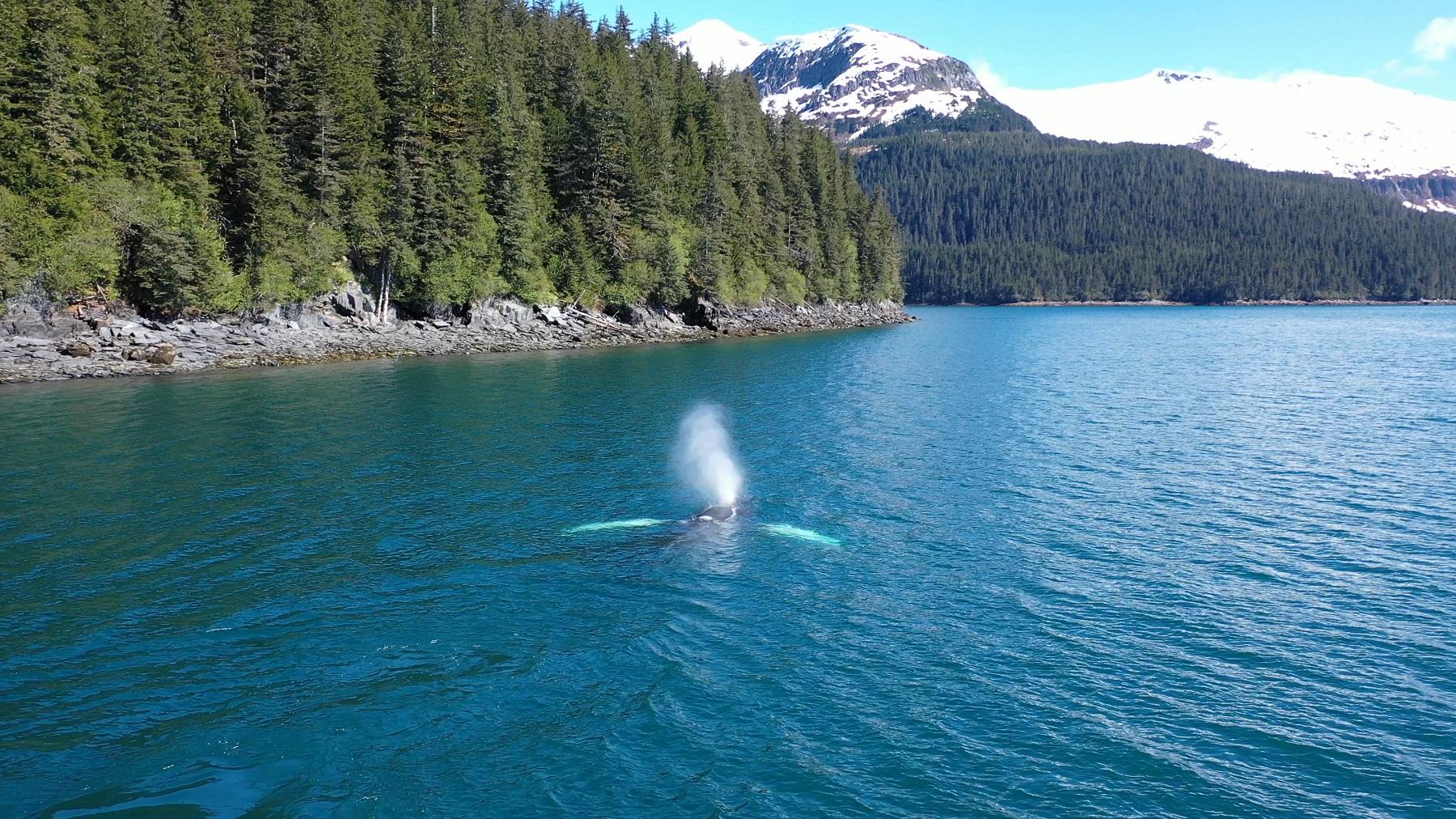 ocean whale Alaska