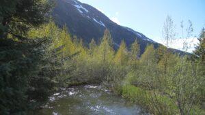 trees blue sky bushes creek