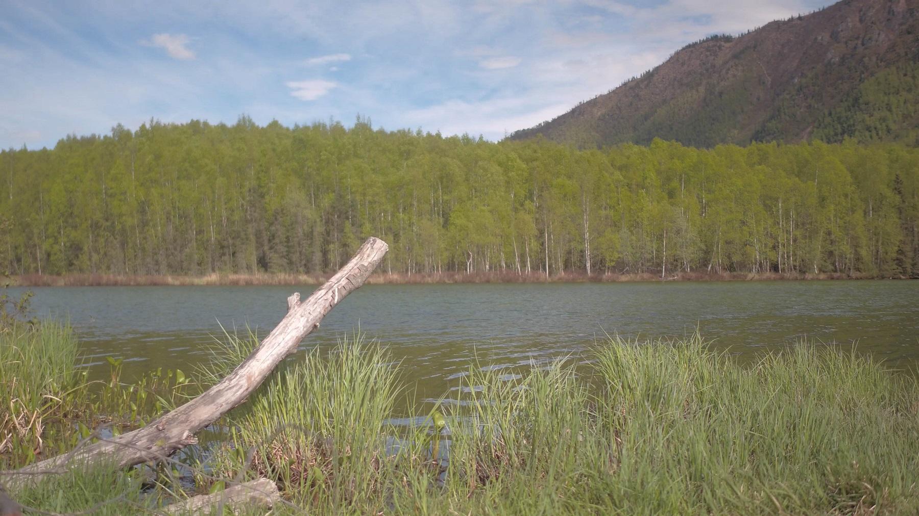 water stick trees mountain