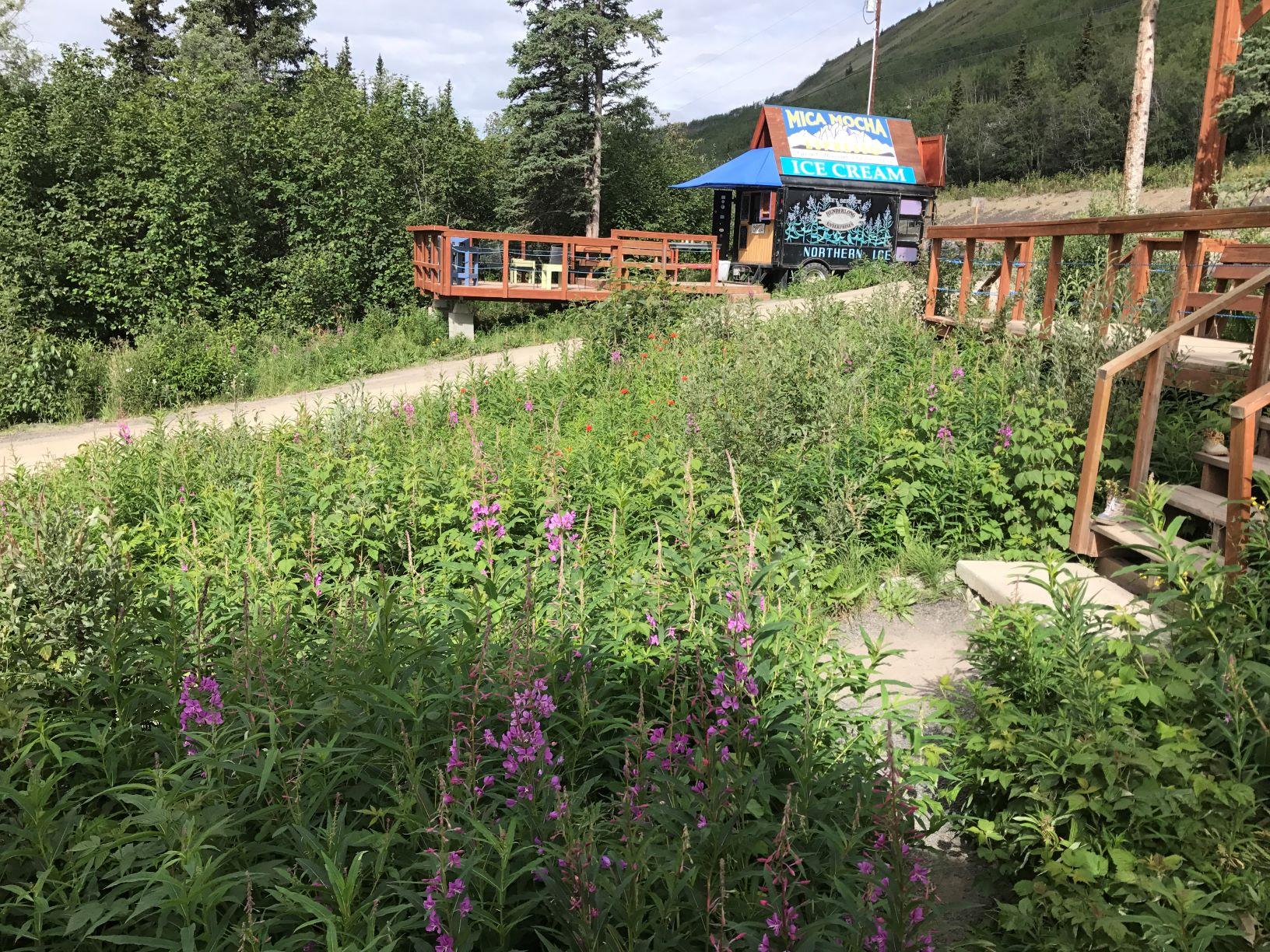 Alaska fireweed and MICA Mocha