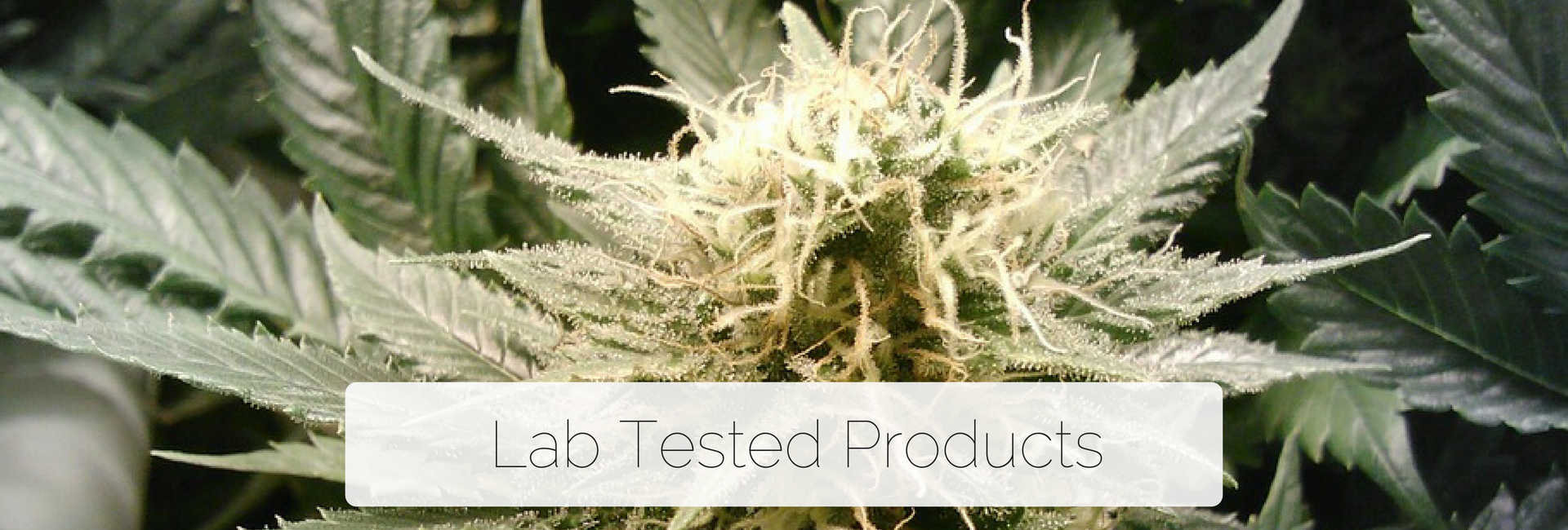 Lab Tested Prodducts
