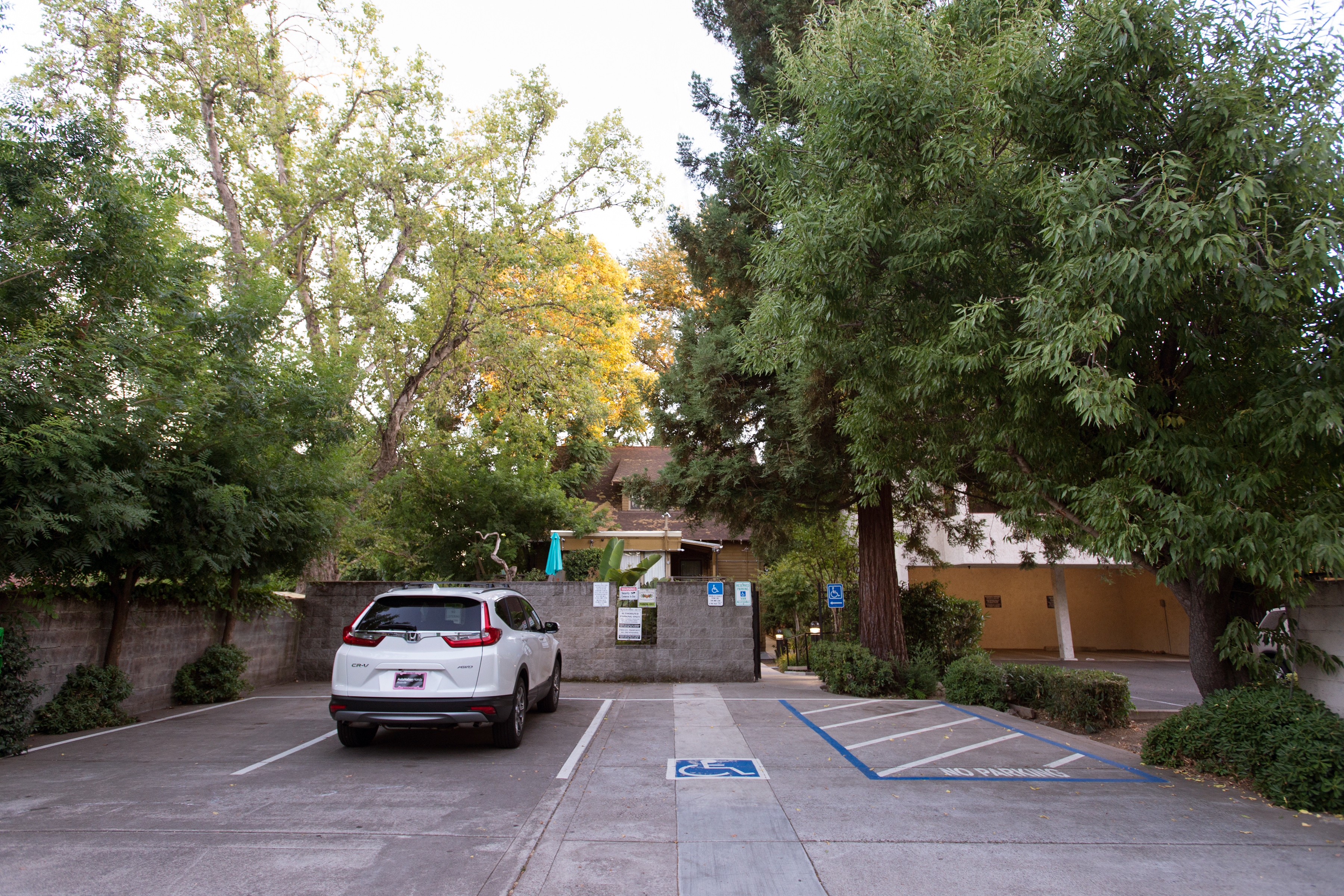 A Therapeutic Alternative Back Alley Parking Lot