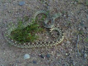 Snake safety tips
