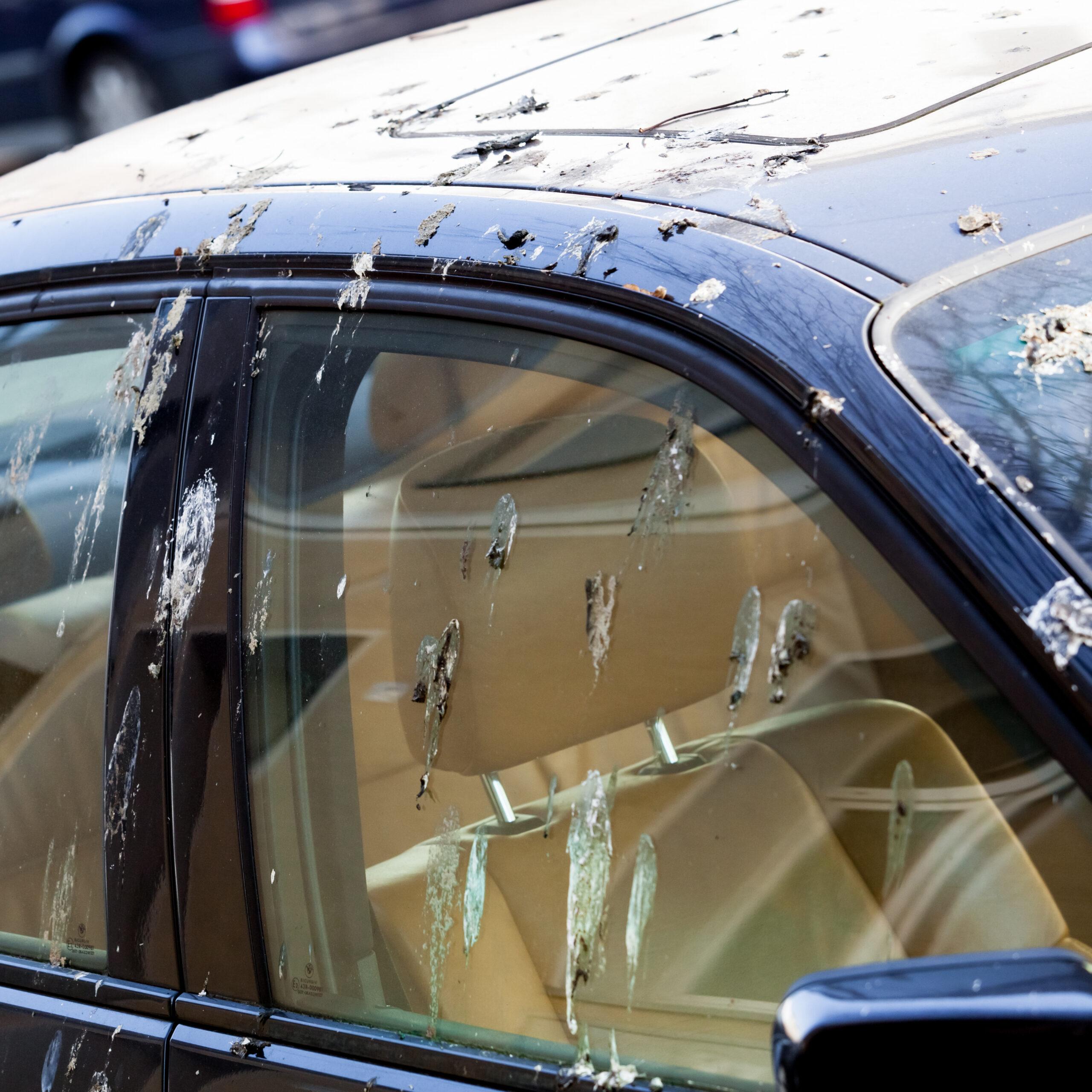 Harmful Effects of Birds Droppings
