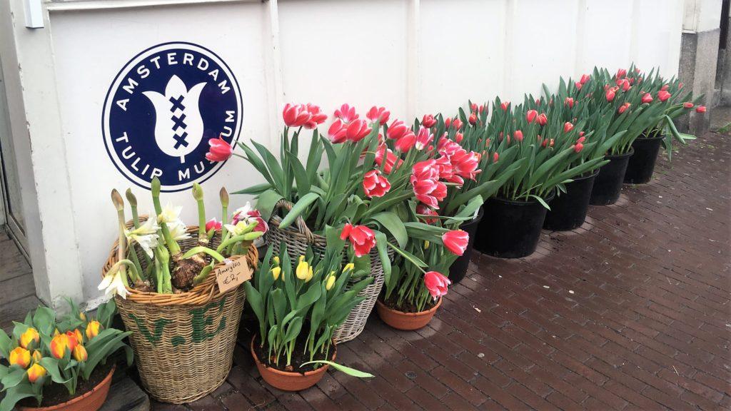 amsterdam; netherlands; holland; top 20; tulip museum
