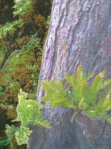 Ferns in Tree