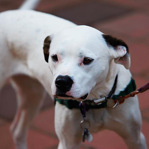 16 – level 2 white dog