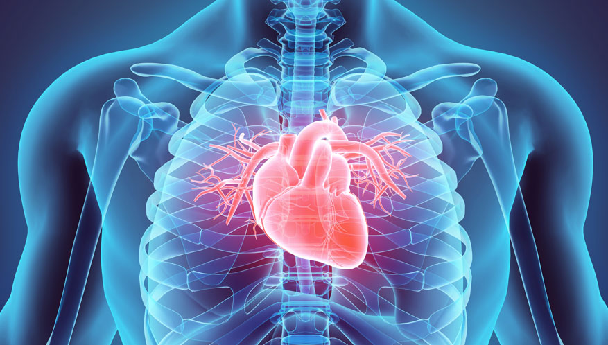 heart and skeleton in invisible body