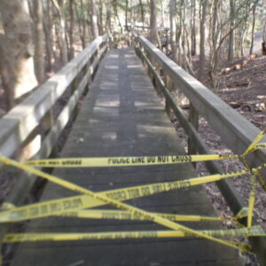 GUNFIRE IN THE SUNKEN FOREST: Fire Island National Seashore Deer Culling Begins