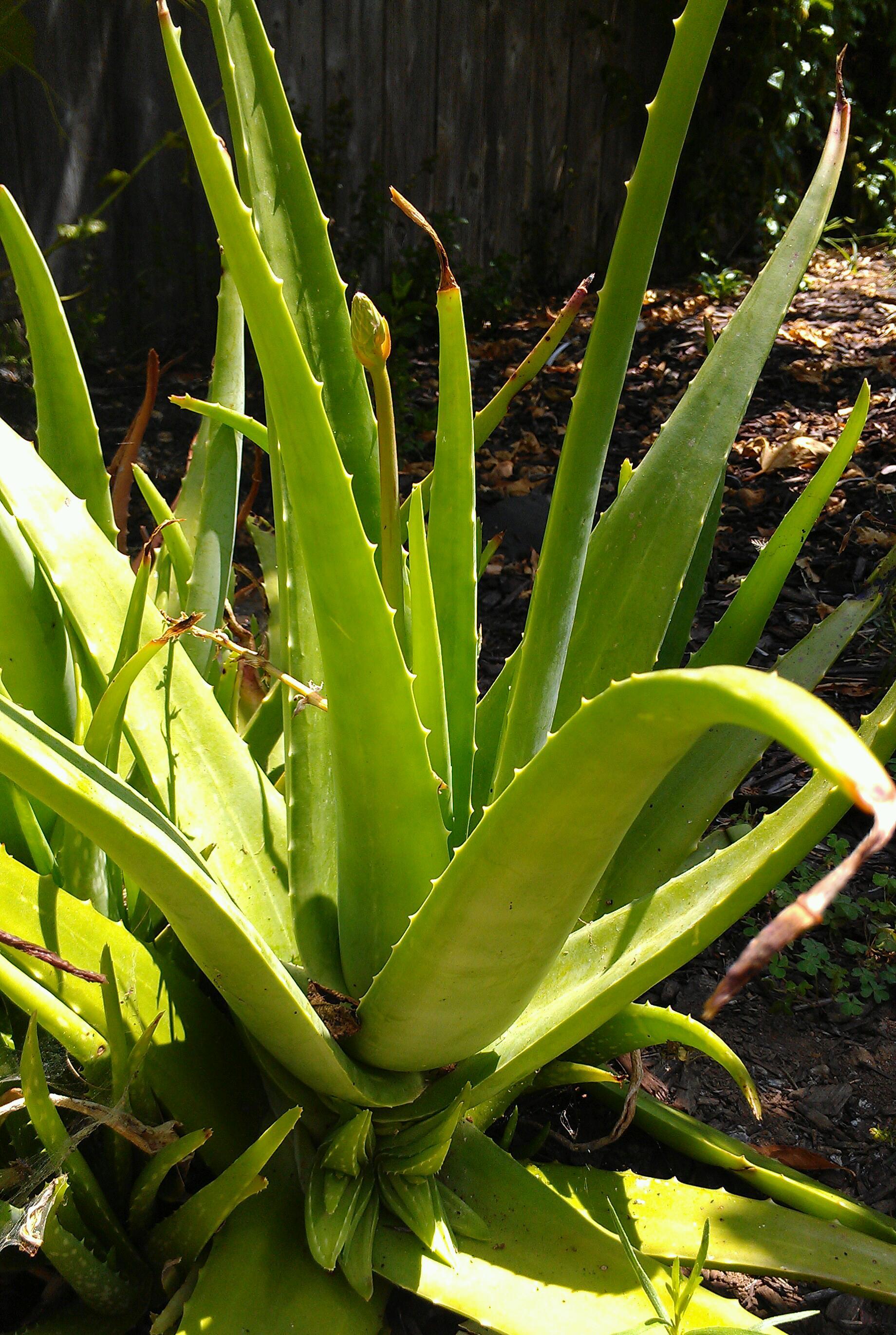 8 Natural Remedies for Sunburns