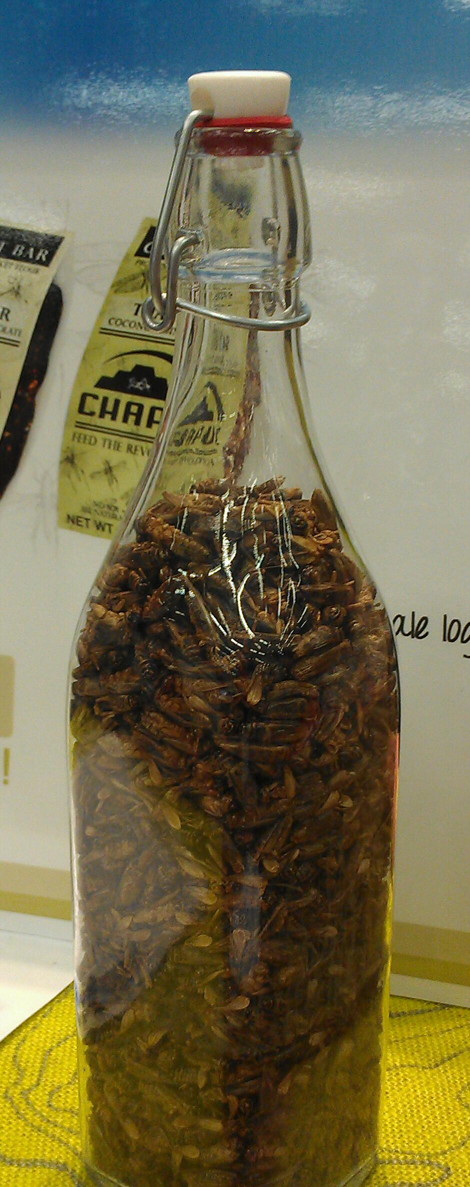 I Chomped on Some Crickets for a Quick Protein Fix.  Would You?