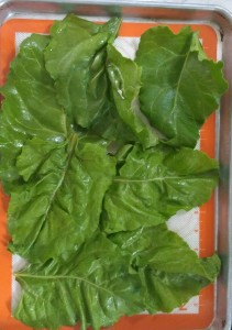 The way not to arrange the beet leaves I quickly learned. Leave a little space between them.