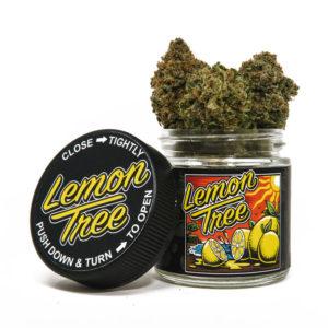 Lemon-Tree-Flower