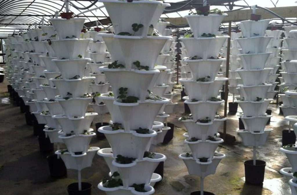 Jimmie's Greenhouses in Alabama