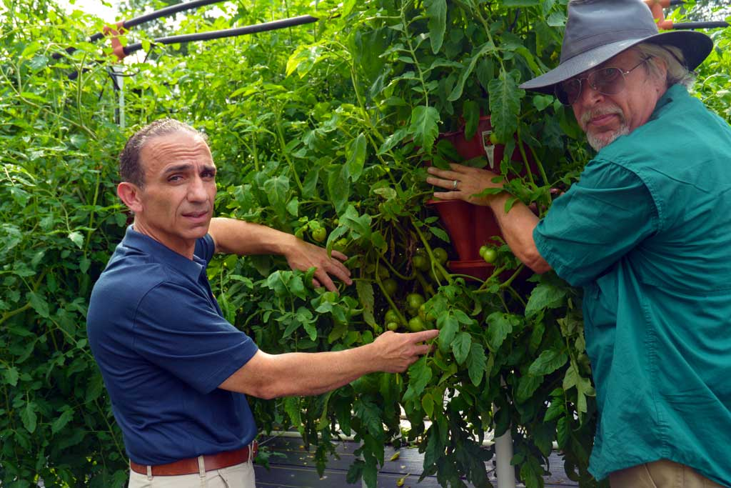 Texas farm goes vertical to net tall yields