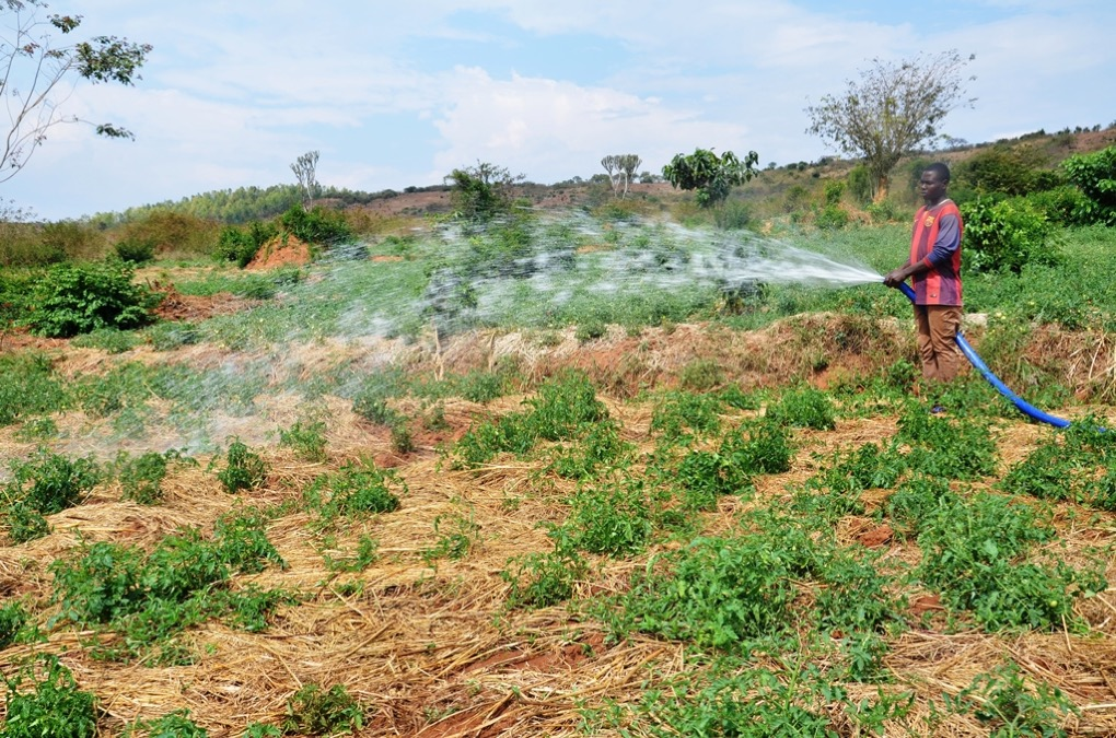 Opportunities in agriculture lie in long standing challenges, experts