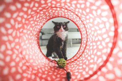 Why Interactive Cat Toys Are So Good for Your Cat (Plus 5 Sweet Choices)