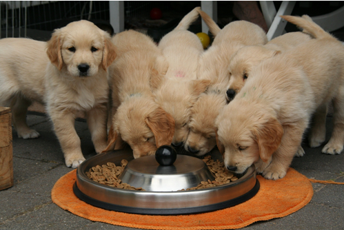 What Do Dogs Eat? The Best and Worst Foods You Can Feed Your Pooch