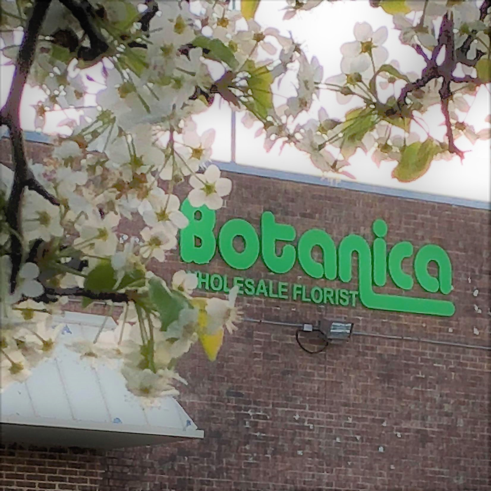 Botanica Front Face