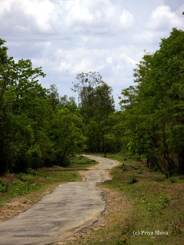 Nagarahole national park