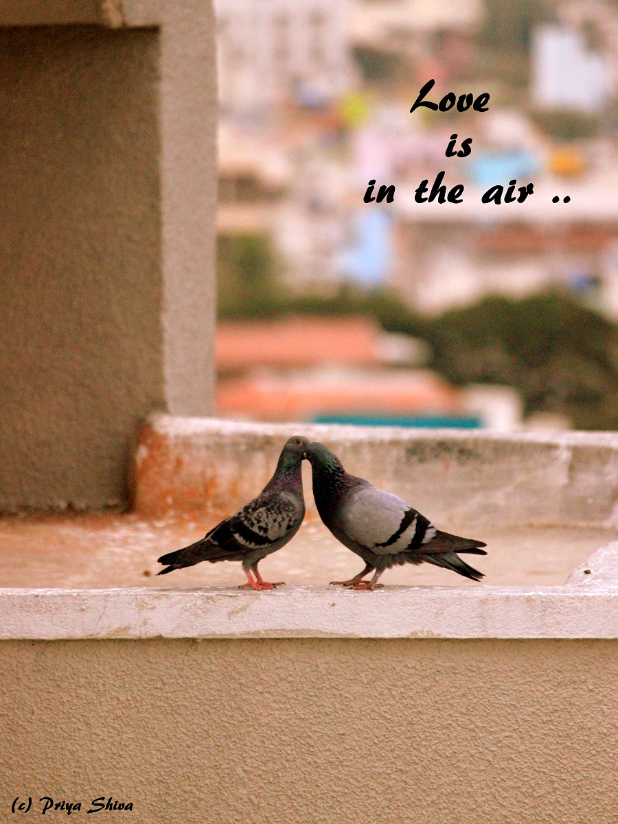 humand and emotions - love is in the air