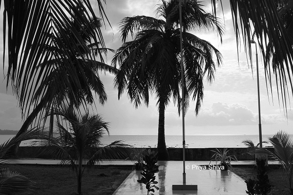 dolphin resort havelock island