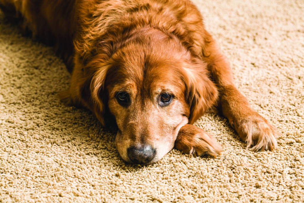carpet cleaning pet stains Paso Robles