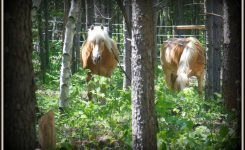 Top 10  Herbs Our Horses Love