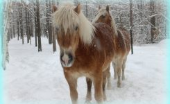 Herbal Blends for Your Horse