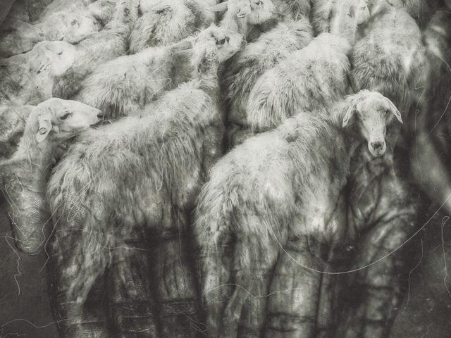A Shepherd's Hem