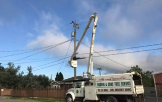 Hodgin & Son Tree Service in Petaluma