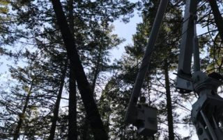 Calistoga Emergency Tree Job
