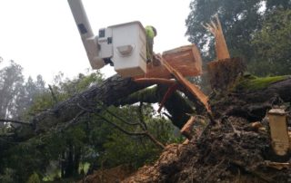 Santa Rosa Emergency Tree Job