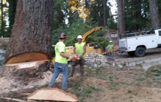 Forestville Large Tree Removal