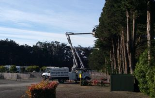 Bodega Bay Tree Trim Job