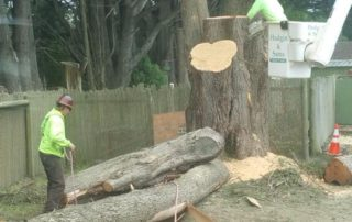 Bodega Bay RV Park Tree Removal
