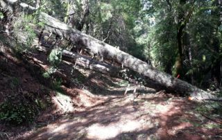 Guerneville Tree Removal