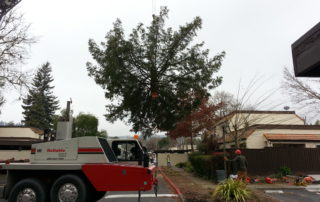 Santa Rosa Tree Removal with Crane