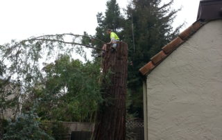Emergency Tree Removal in Santa Rosa