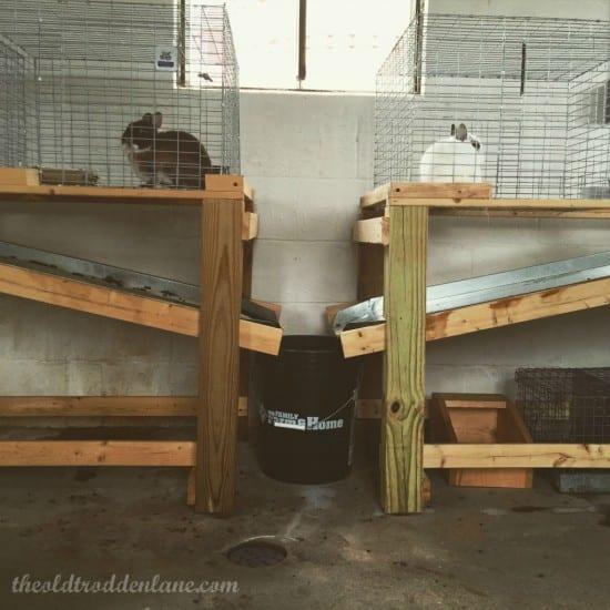 The Old Trodden Land Featured on Homestead Blog Hop