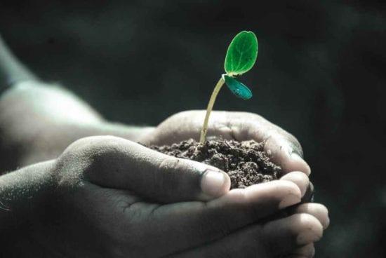 Homestead Blog Hop Feature - organic 4 green livings