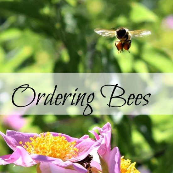 Homestead Blog Hop Feature - Ordering Bees from Oak Hill Homestead