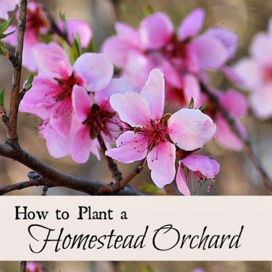 Homestead Blog Hop Feature - Oak Hill Homestead