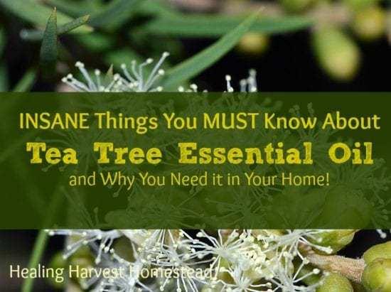Homestead Blog Hop Feature Healing Harvest Homestead