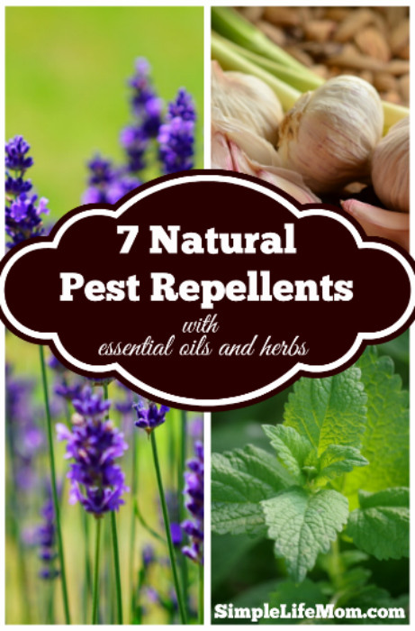 7 Natural Pest Repellents from Simple Life Mom