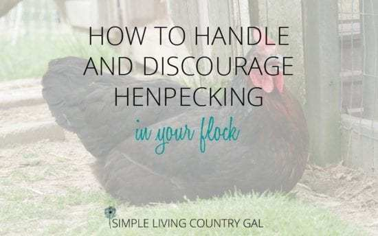 Homestead Bog Hop Feature - how-to-discourage-henpecking-in-your-flock