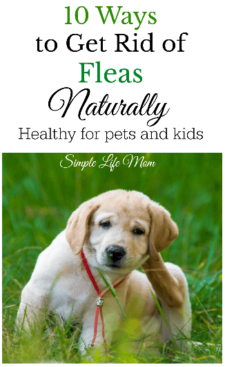 10 Ways to Get Rid of Fleas Naturally from Simple Life Mom